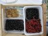 fruits2012_07